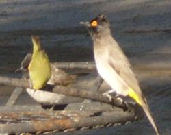Bird south africa