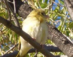oiseau afrique du sud